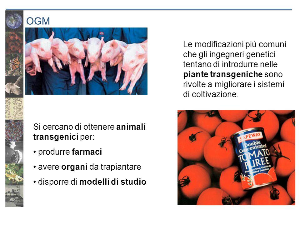 OGM Si cercano di ottenere animali transgenici per: produrre farmaci avere organi da trapiantare disporre di modelli di studio Le modificazioni più co