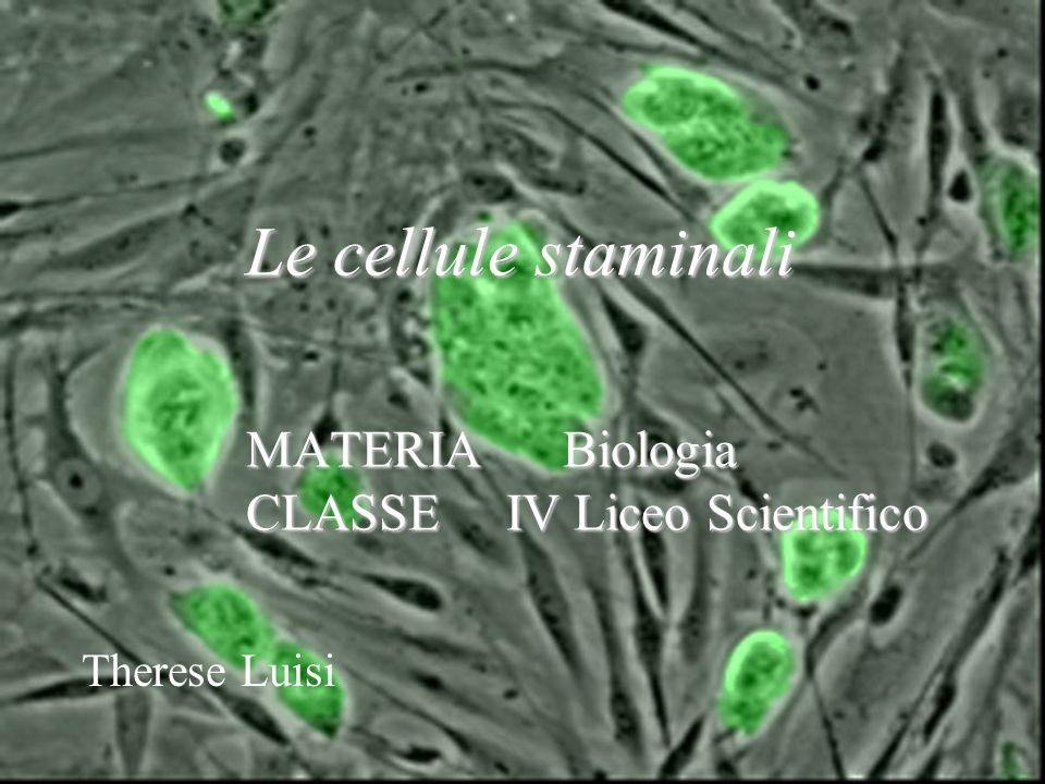 Le cellule staminali MATERIA Biologia CLASSE IV Liceo Scientifico Therese Luisi