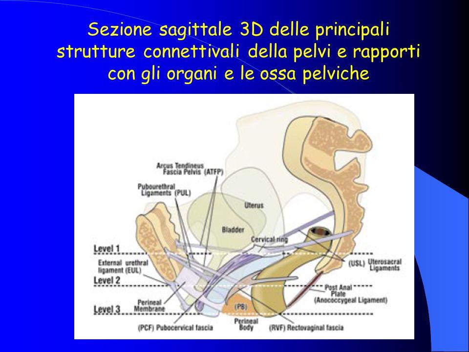 Sezione sagittale 3D delle principali strutture connettivali della pelvi e rapporti con gli organi e le ossa pelviche