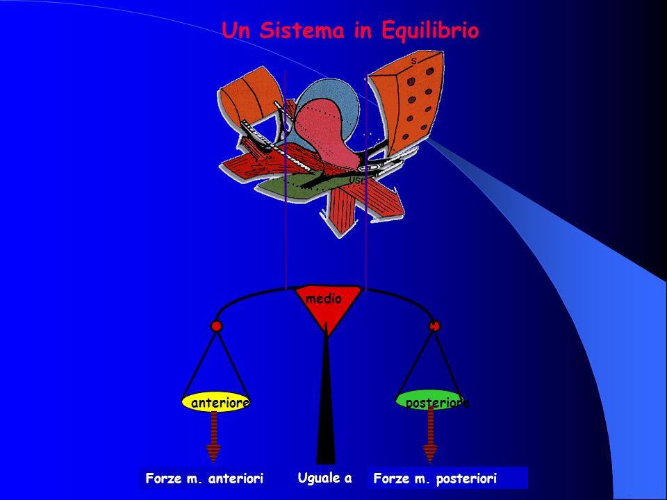 anterioreposteriore medio Un Sistema in Equilibrio Forze m. anteriori Uguale a Forze m. posteriori