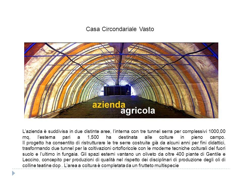Lazienda è suddivisa in due distinte aree, linterna con tre tunnel serra per complessivi 1000,00 mq, lesterna pari a 1,500 ha destinata alle colture in pieno campo.