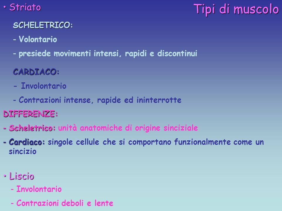 Tipi di muscolo Striato Striato Liscio LiscioSCHELETRICO: -Volontario -presiede movimenti intensi, rapidi e discontinui CARDIACO: - Involontario -Contrazioni intense, rapide ed ininterrotte -Involontario -Contrazioni deboli e lente DIFFERENZE: -Scheletrico: -Scheletrico: unità anatomiche di origine sinciziale -Cardiaco: -Cardiaco: singole cellule che si comportano funzionalmente come un sincizio