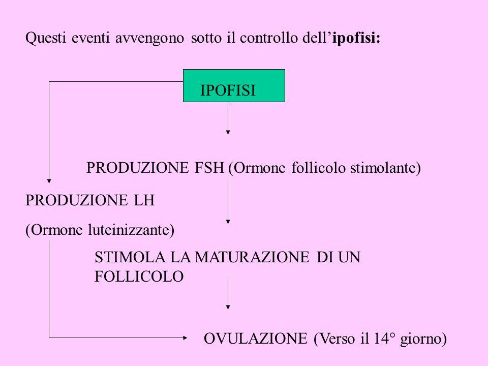 Questi eventi avvengono sotto il controllo dellipofisi: IPOFISI PRODUZIONE FSH (Ormone follicolo stimolante) STIMOLA LA MATURAZIONE DI UN FOLLICOLO OV