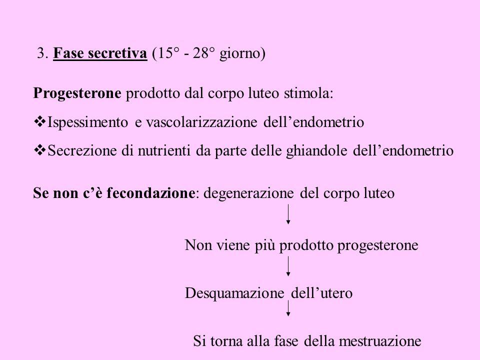 3. Fase secretiva (15° - 28° giorno) Progesterone prodotto dal corpo luteo stimola: Ispessimento e vascolarizzazione dellendometrio Secrezione di nutr