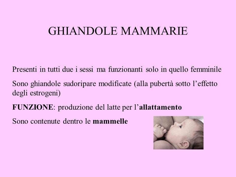 GHIANDOLE MAMMARIE Presenti in tutti due i sessi ma funzionanti solo in quello femminile Sono ghiandole sudoripare modificate (alla pubertà sotto leff