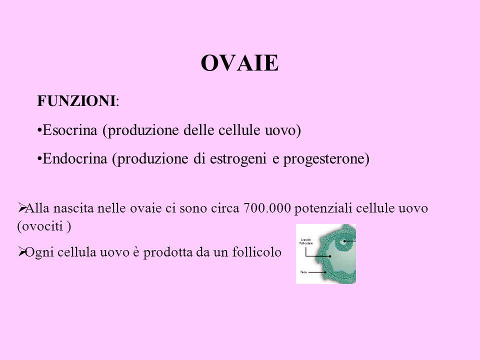 OVAIE FUNZIONI: Esocrina (produzione delle cellule uovo) Endocrina (produzione di estrogeni e progesterone) Alla nascita nelle ovaie ci sono circa 700