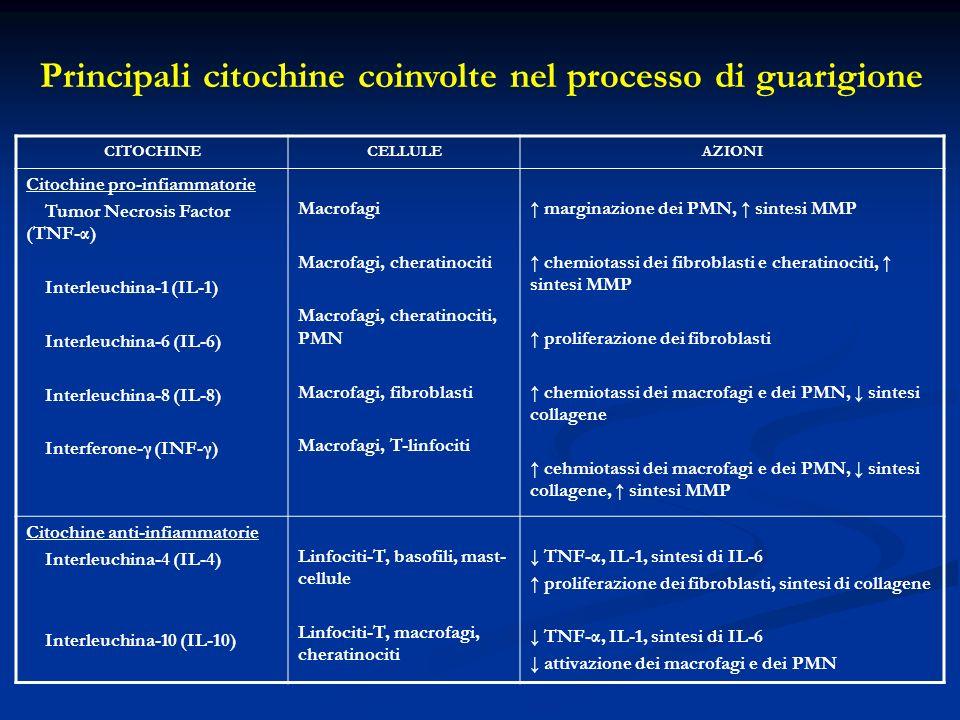 CITOCHINECELLULEAZIONI Citochine pro-infiammatorie Tumor Necrosis Factor (TNF-α) Interleuchina-1 (IL-1) Interleuchina-6 (IL-6) Interleuchina-8 (IL-8) Interferone-γ (INF-γ) Macrofagi Macrofagi, cheratinociti Macrofagi, cheratinociti, PMN Macrofagi, fibroblasti Macrofagi, T-linfociti marginazione dei PMN, sintesi MMP chemiotassi dei fibroblasti e cheratinociti, sintesi MMP proliferazione dei fibroblasti chemiotassi dei macrofagi e dei PMN, sintesi collagene cehmiotassi dei macrofagi e dei PMN, sintesi collagene, sintesi MMP Citochine anti-infiammatorie Interleuchina-4 (IL-4) Interleuchina-10 (IL-10) Linfociti-T, basofili, mast- cellule Linfociti-T, macrofagi, cheratinociti TNF-α, IL-1, sintesi di IL-6 proliferazione dei fibroblasti, sintesi di collagene TNF-α, IL-1, sintesi di IL-6 attivazione dei macrofagi e dei PMN Principali citochine coinvolte nel processo di guarigione