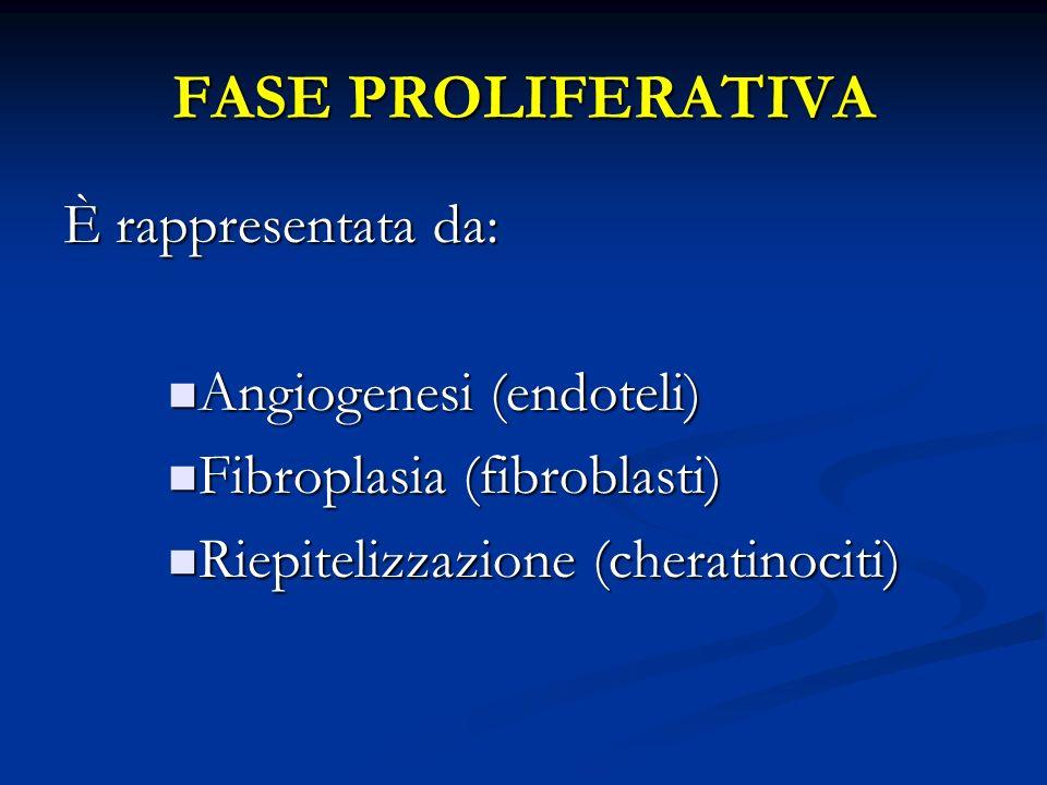FASE PROLIFERATIVA È rappresentata da: Angiogenesi (endoteli) Angiogenesi (endoteli) Fibroplasia (fibroblasti) Fibroplasia (fibroblasti) Riepitelizzazione (cheratinociti) Riepitelizzazione (cheratinociti)