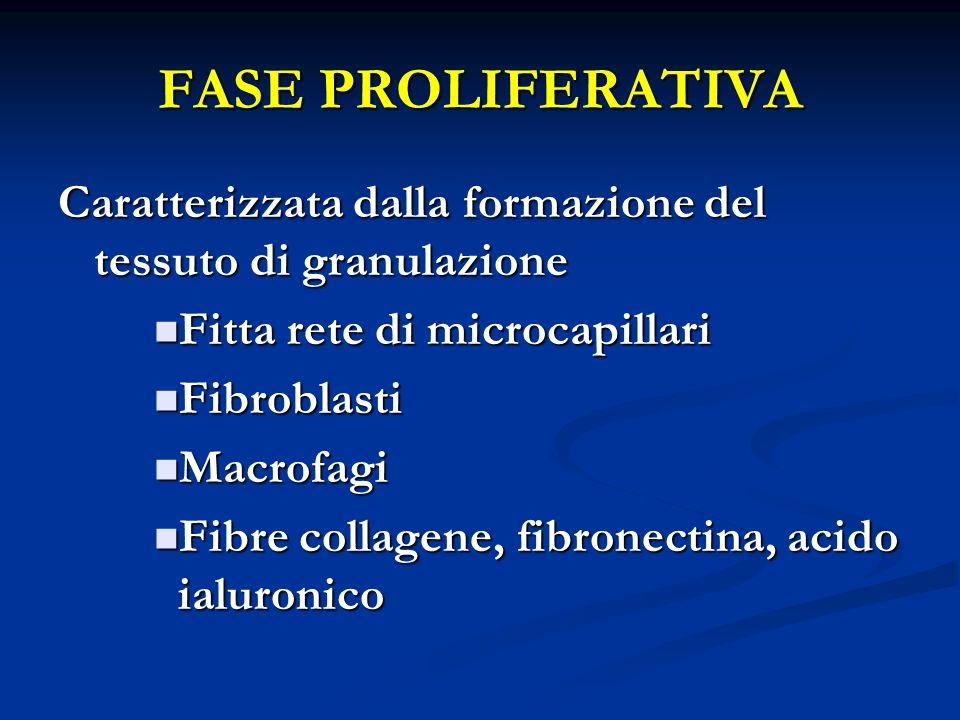 FASE PROLIFERATIVA Caratterizzata dalla formazione del tessuto di granulazione Fitta rete di microcapillari Fitta rete di microcapillari Fibroblasti F