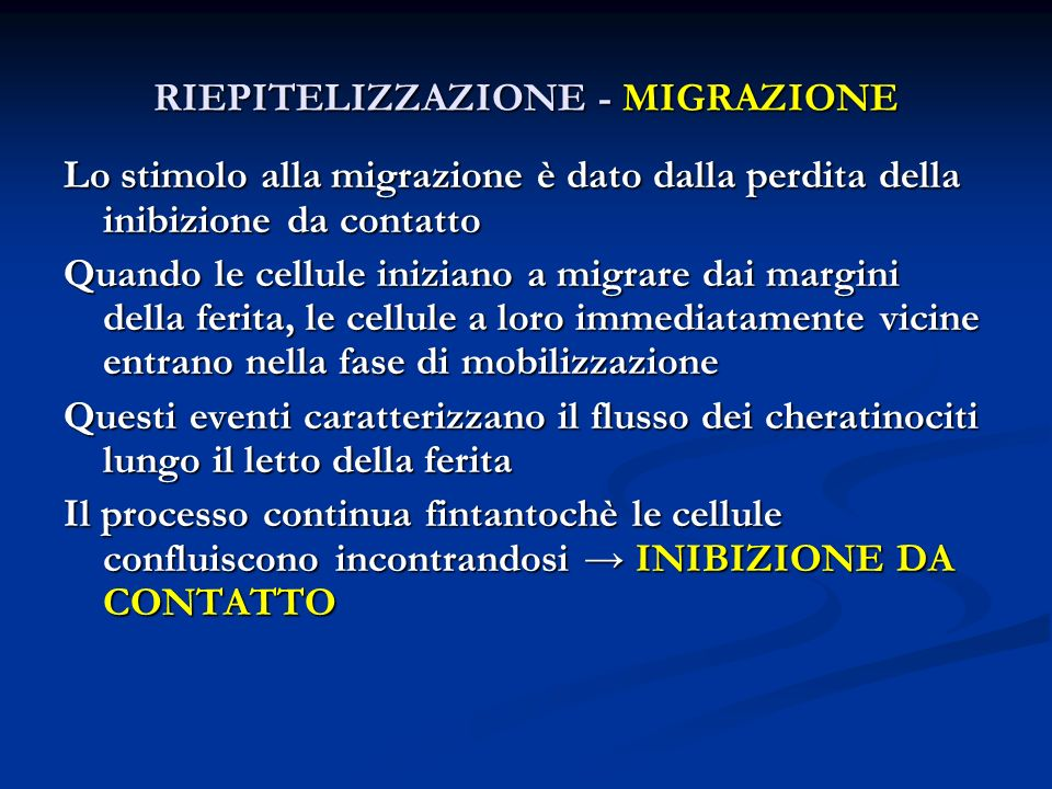 Lo stimolo alla migrazione è dato dalla perdita della inibizione da contatto Quando le cellule iniziano a migrare dai margini della ferita, le cellule