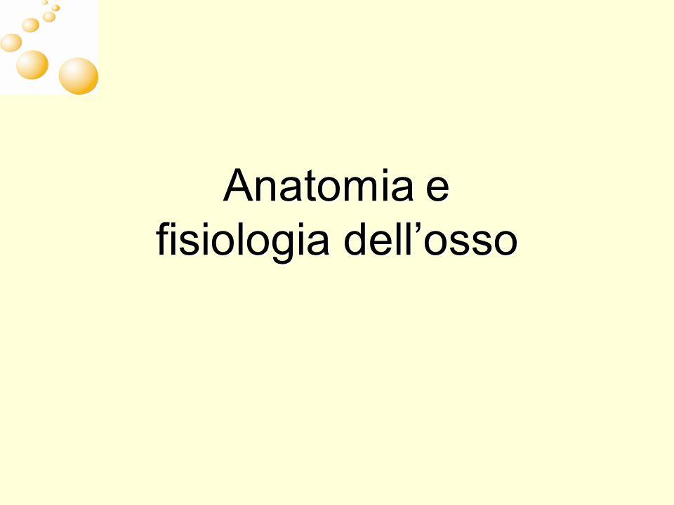 Anatomia e fisiologia dellosso