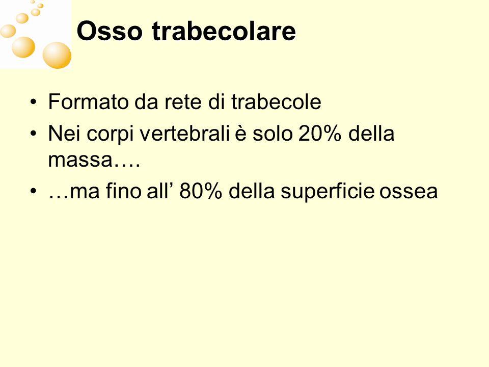 Osso trabecolare Formato da rete di trabecole Nei corpi vertebrali è solo 20% della massa…. …ma fino all 80% della superficie ossea