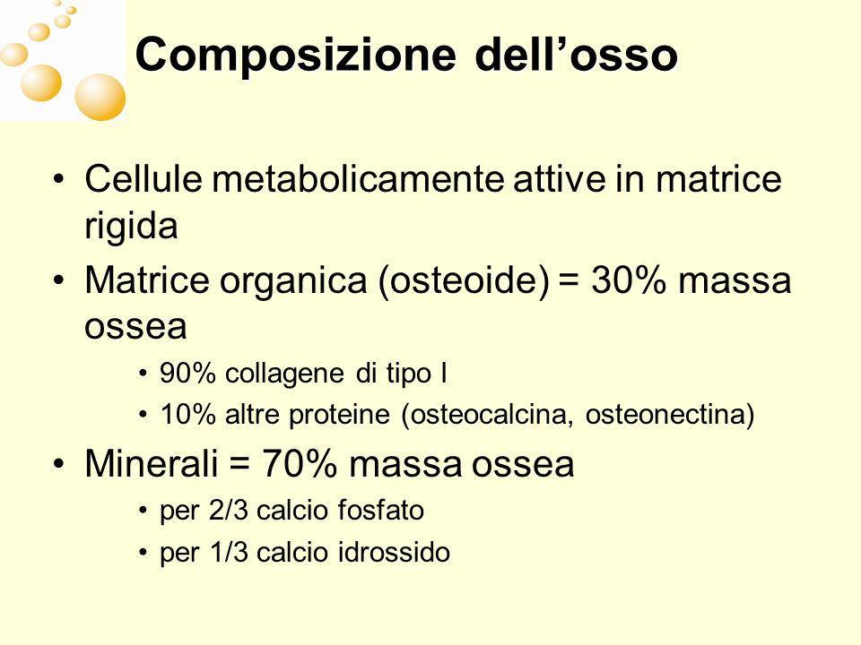 Composizione dellosso Cellule metabolicamente attive in matrice rigida Matrice organica (osteoide) = 30% massa ossea 90% collagene di tipo I 10% altre