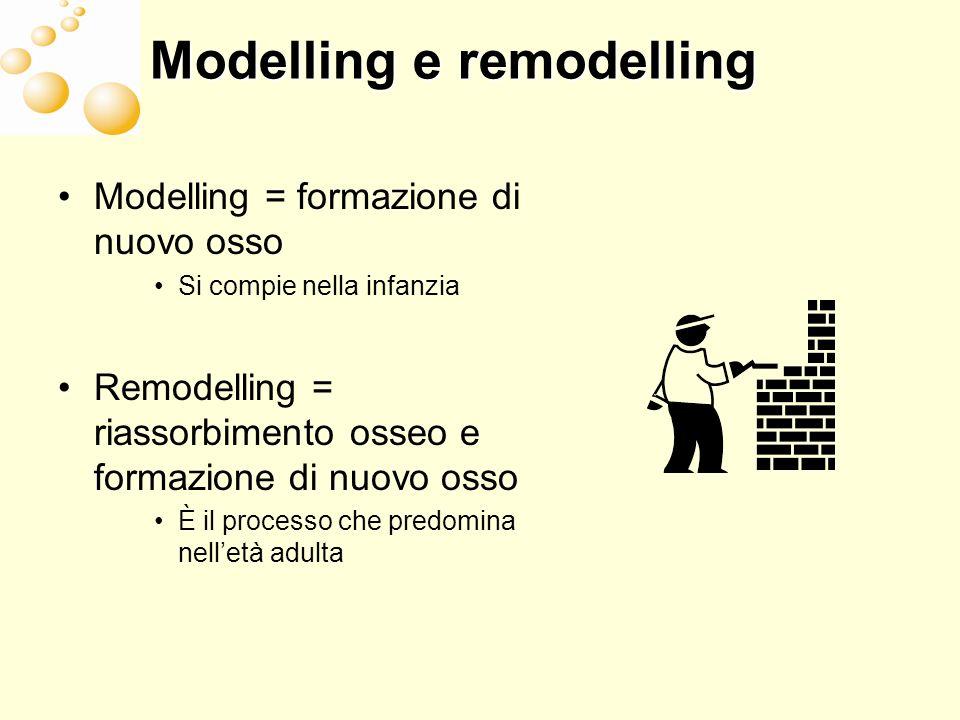 Modelling e remodelling Modelling = formazione di nuovo osso Si compie nella infanzia Remodelling = riassorbimento osseo e formazione di nuovo osso È