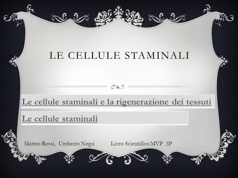 LE CELLULE STAMINALI Le cellule staminali e la rigenerazione dei tessuti Le cellule staminali Matteo Rossi, Umberto Negri Liceo Scientifico MVP 3P