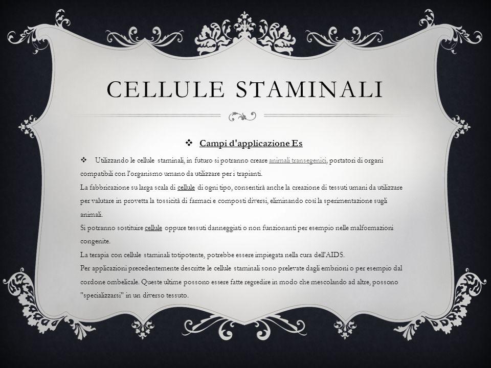 CELLULE STAMINALI Campi d'applicazione Es Utilizzando le cellule staminali, in futuro si potranno creare animali transegenici, portatori di organi com
