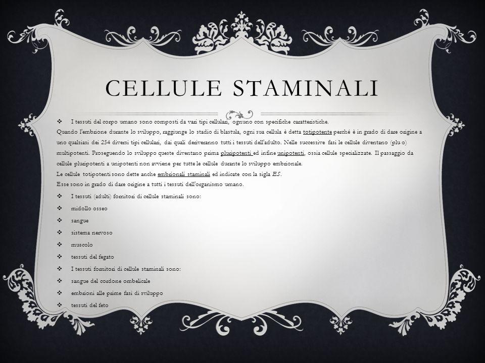 CELLULE STAMINALI I tessuti del corpo umano sono composti da vari tipi cellulari, ognuno con specifiche caratteristiche. Quando l'embrione durante lo