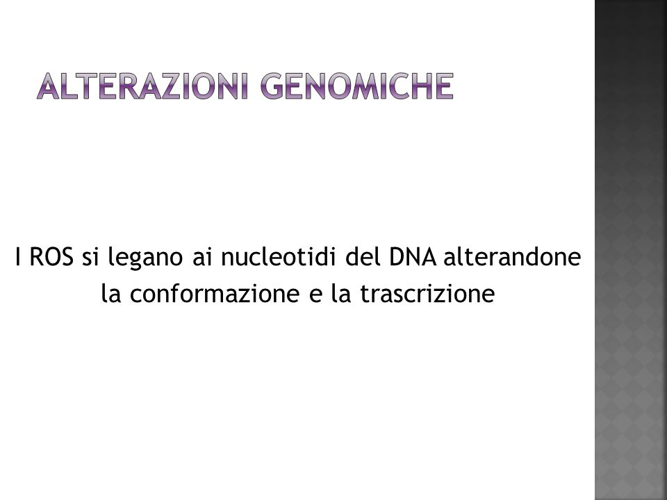 I ROS si legano ai nucleotidi del DNA alterandone la conformazione e la trascrizione