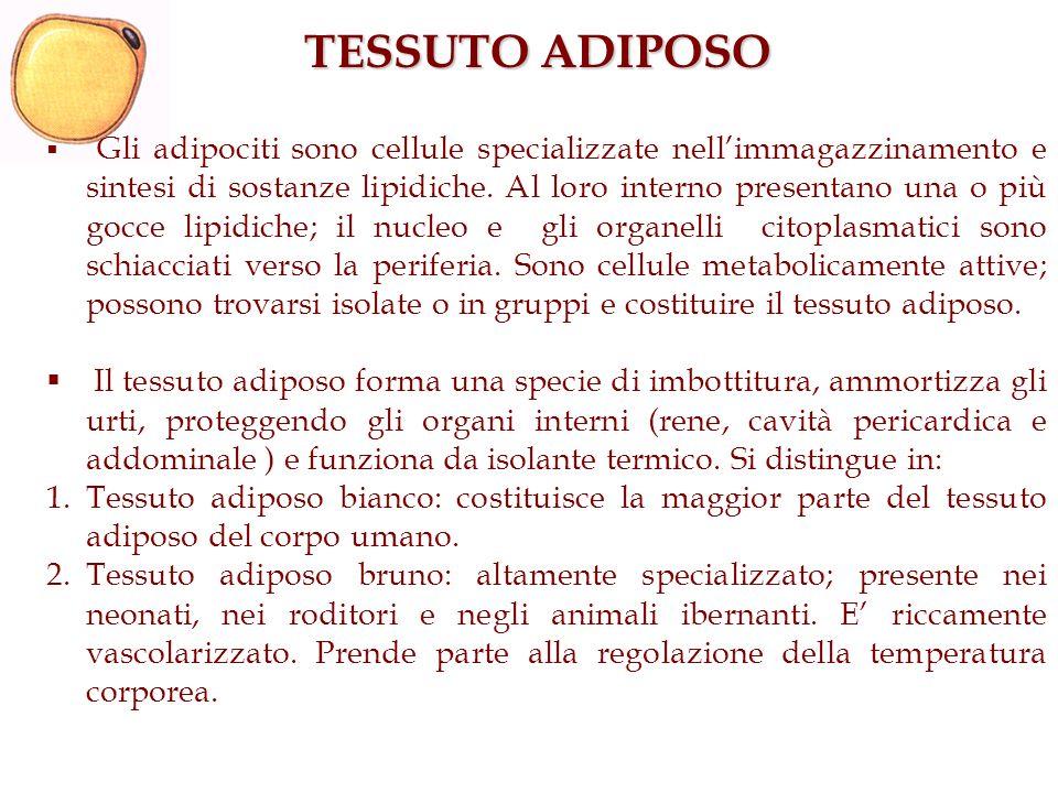 TESSUTO ADIPOSO Gli adipociti sono cellule specializzate nellimmagazzinamento e sintesi di sostanze lipidiche. Al loro interno presentano una o più go