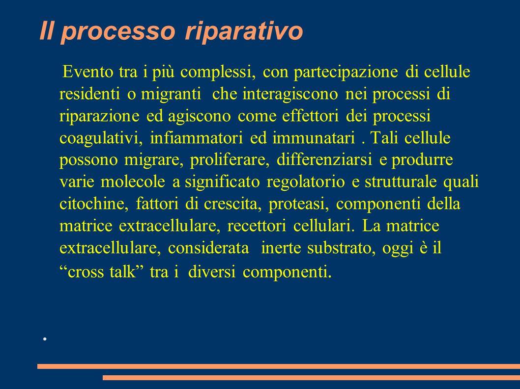 Il processo riparativo Evento tra i più complessi, con partecipazione di cellule residenti o migranti che interagiscono nei processi di riparazione ed