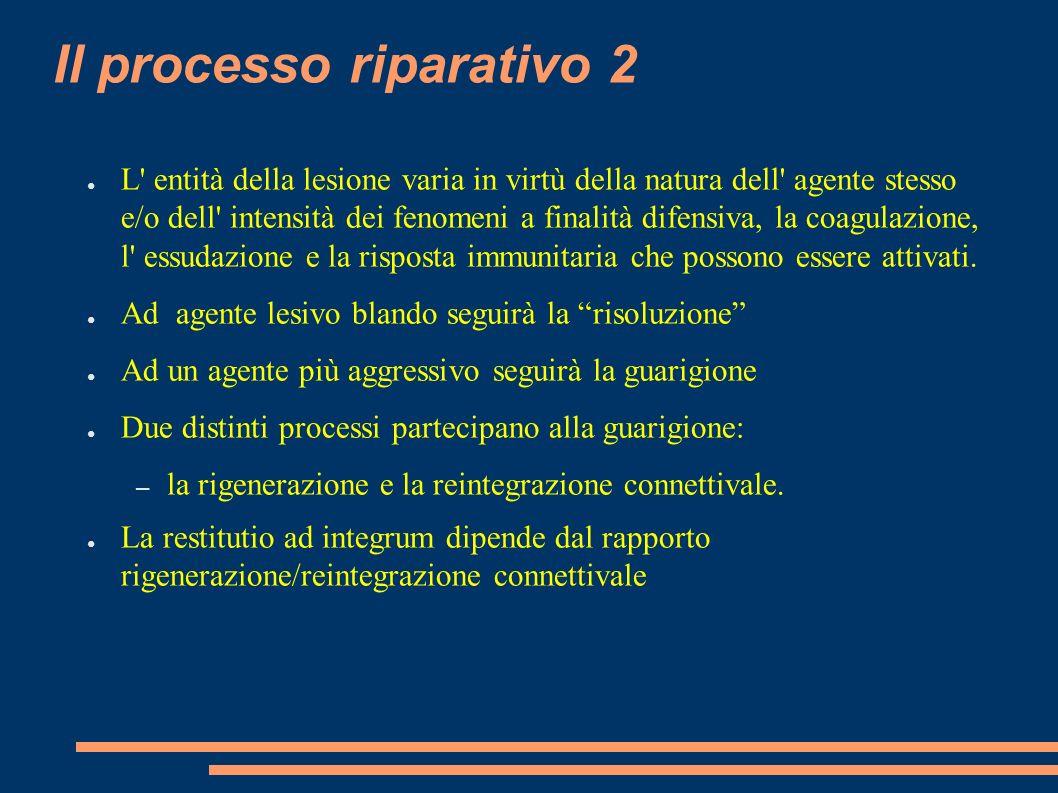 Il processo riparativo 2 L' entità della lesione varia in virtù della natura dell' agente stesso e/o dell' intensità dei fenomeni a finalità difensiva