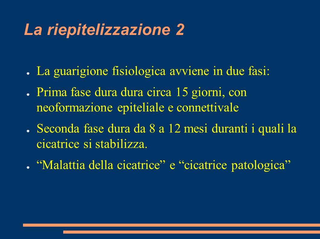 La riepitelizzazione 2 La guarigione fisiologica avviene in due fasi: Prima fase dura dura circa 15 giorni, con neoformazione epiteliale e connettival