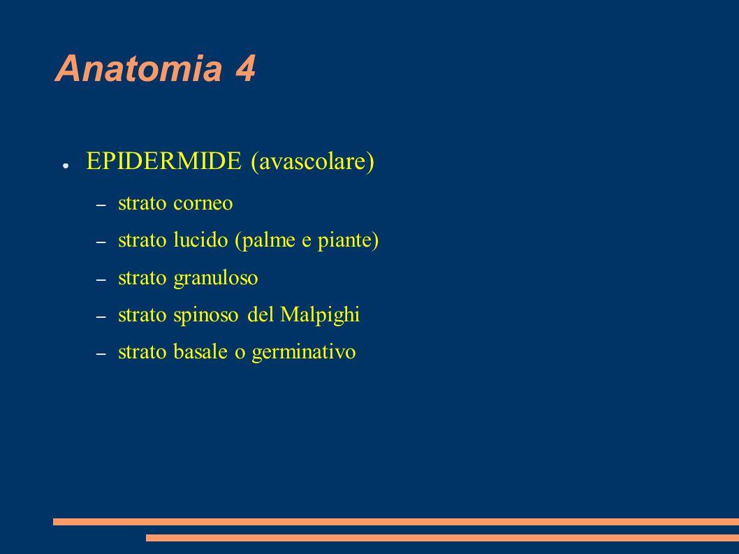 Anatomia 4 EPIDERMIDE (avascolare) – strato corneo – strato lucido (palme e piante) – strato granuloso – strato spinoso del Malpighi – strato basale o
