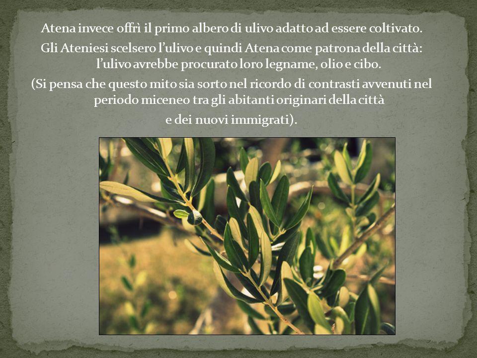 Atena invece offrì il primo albero di ulivo adatto ad essere coltivato. Gli Ateniesi scelsero lulivo e quindi Atena come patrona della città: lulivo a