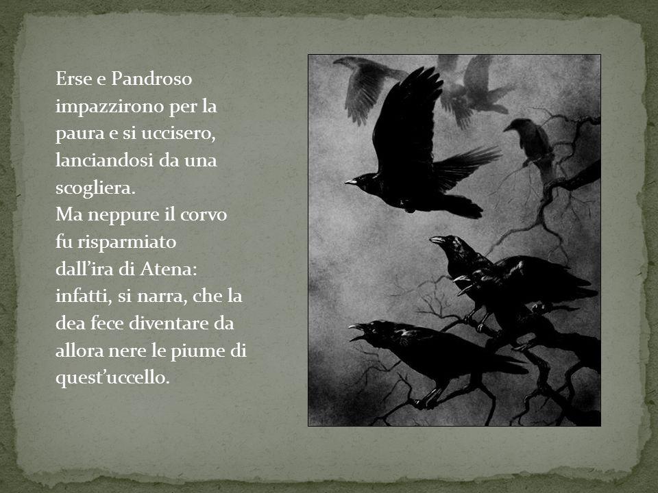 Erse e Pandroso impazzirono per la paura e si uccisero, lanciandosi da una scogliera. Ma neppure il corvo fu risparmiato dallira di Atena: infatti, si