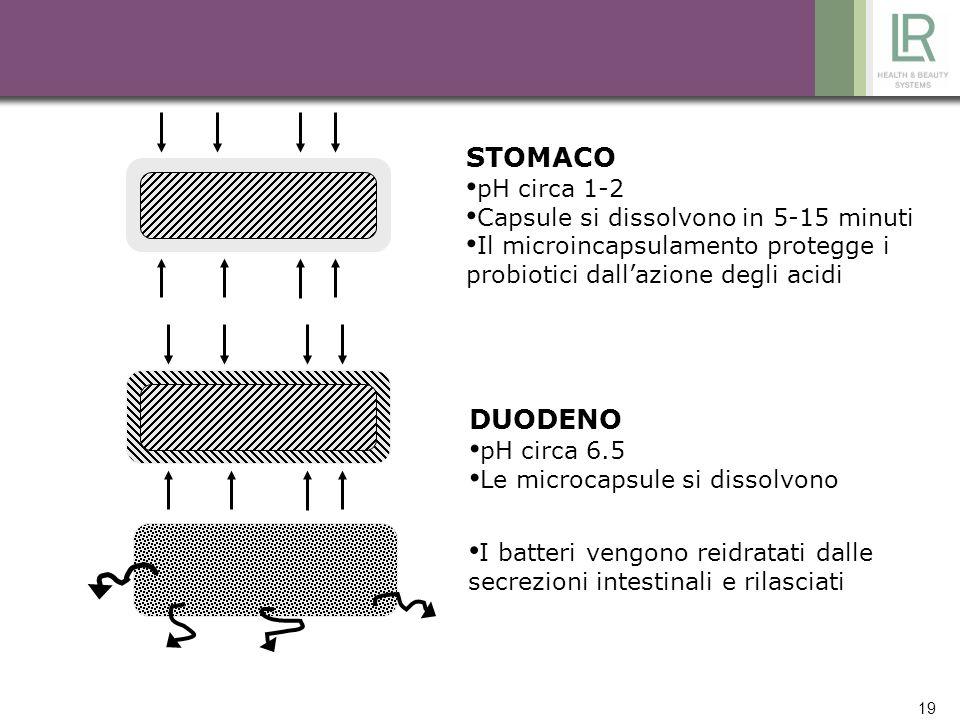 19 STOMACO pH circa 1-2 Capsule si dissolvono in 5-15 minuti Il microincapsulamento protegge i probiotici dallazione degli acidi DUODENO pH circa 6.5