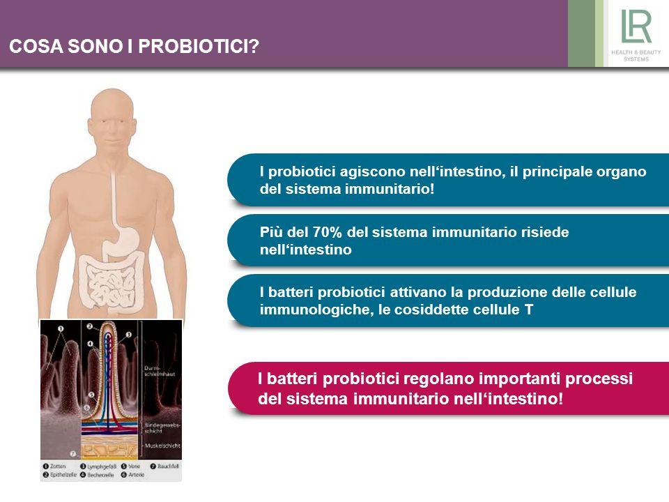 I probiotici agiscono nellintestino, il principale organo del sistema immunitario! Più del 70% del sistema immunitario risiede nellintestino I batteri