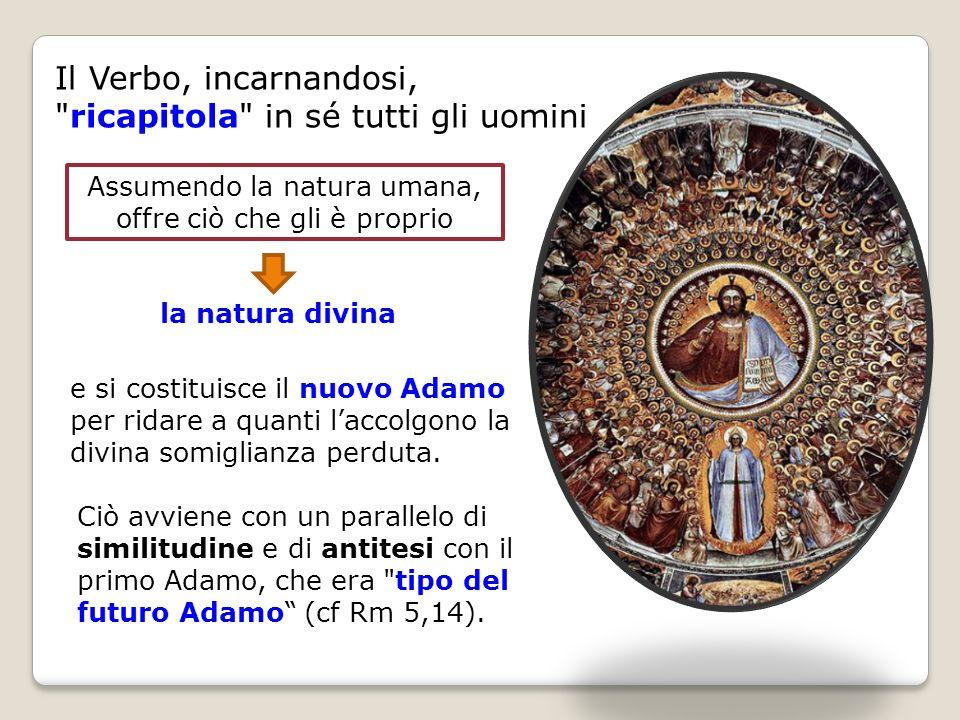 Il Verbo, incarnandosi, ricapitola in sé tutti gli uomini Ciò avviene con un parallelo di similitudine e di antitesi con il primo Adamo, che era tipo del futuro Adamo (cf Rm 5,14).