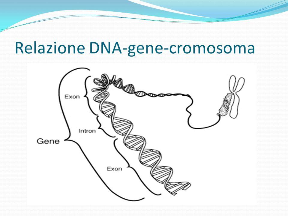 Confronto tra sequenze genomiche METODI : - Mapping, determinare la posizione dei geni su un cromosoma e la distanza che li separa - Sequencing, identificare lordine delle unità chimiche base del Dna (sequenze nucleotidiche) BENEFICI : - diagnosi e cura di malattie oggi incurabili - migliori selezioni di prodotti di agricoltura e allevamento - miglioramento nelle tecniche di investigazione criminale