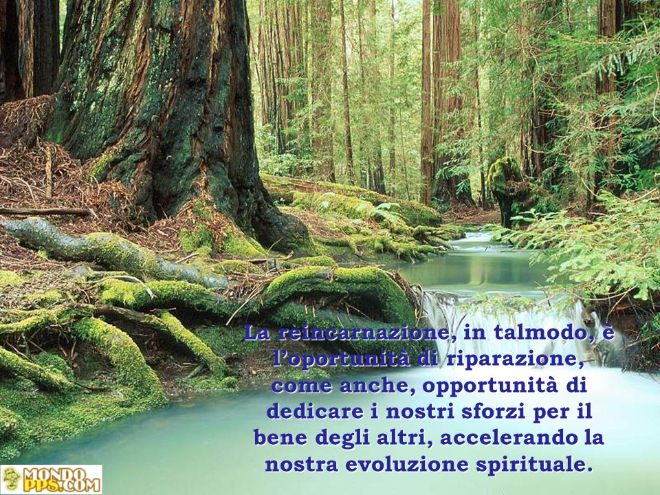 La reincarnazione, in talmodo, è loportunità di riparazione, come anche, opportunità di dedicare i nostri sforzi per il bene degli altri, accelerando la nostra evoluzione spirituale.