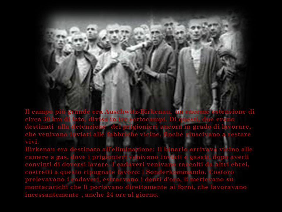 Il campo più grande era Auschwitz-Birkenau, un enorme estensione di circa 30 km di lato, divisa in tre sottocampi. Di questi, due erano destinati alla