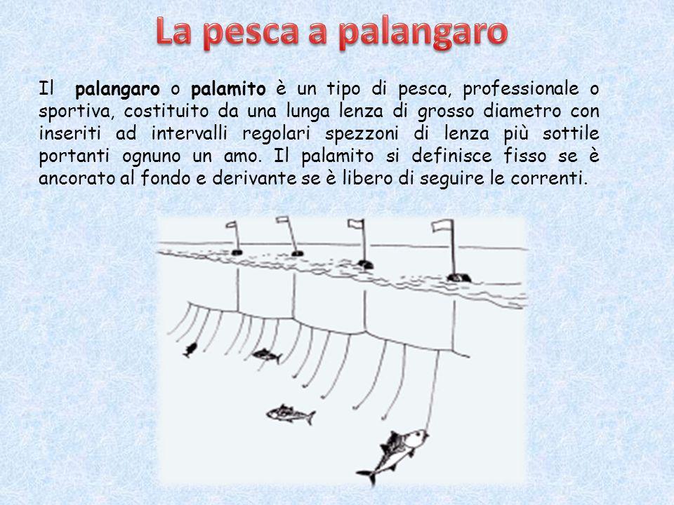 La pesca a strascico è fonte di notevole impatto sull'ambiente marino. Le reti a strascico infatti distruggono o asportano qualunque cosa incontrino s