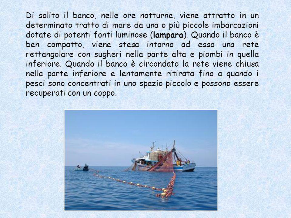 Il cianciolo, detto anche saccoleva, è il tipo più comune di pesca da circuizione ed è indirizzata in genere a specie che vivono in banchi, sia piccol