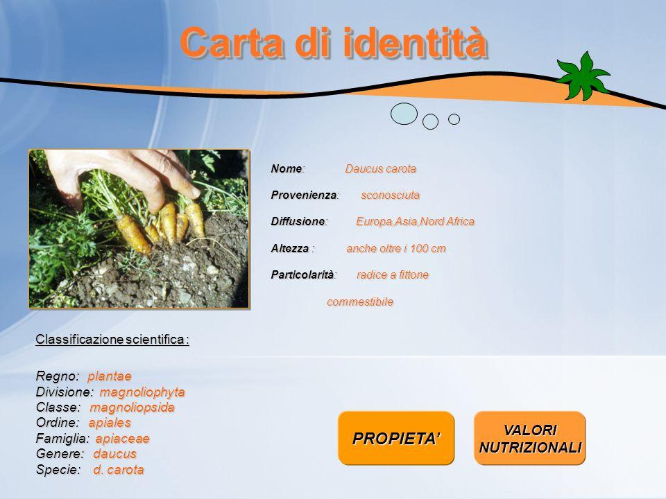 Carta di identità Nome: Daucus carota Provenienza: sconosciuta Diffusione: Europa,Asia,Nord Africa Altezza : anche oltre i 100 cm Particolarità: radic