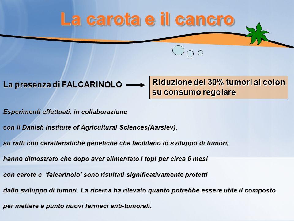 La carota e il cancro La presenza di FALCARINOLO Riduzione del 30% tumori al colon su consumo regolare Esperimenti effettuati, in collaborazione con i