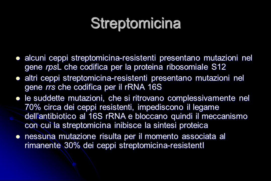 Streptomicina alcuni ceppi streptomicina-resistenti presentano mutazioni nel gene rpsL che codifica per la proteina ribosomiale S12 alcuni ceppi strep