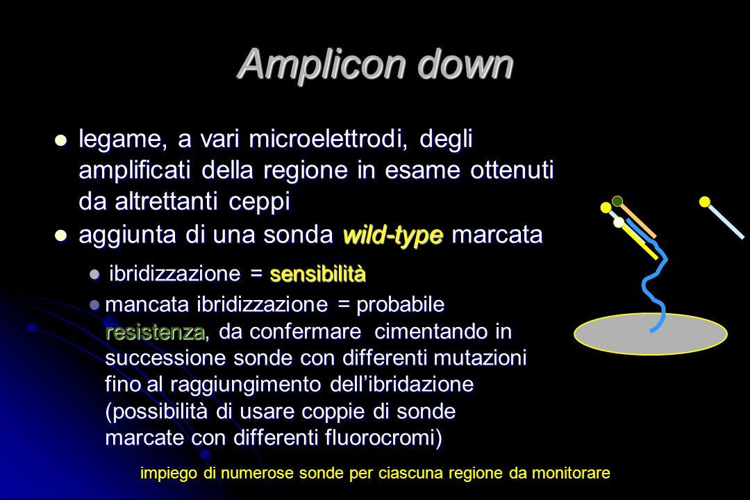 Amplicon down mancata ibridizzazione = probabile resistenza, da confermare cimentando in successione sonde con differenti mutazioni fino al raggiungim