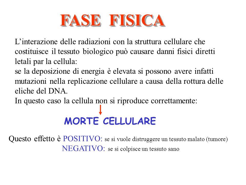FASE FISICA Linterazione delle radiazioni con la struttura cellulare che costituisce il tessuto biologico può causare danni fisici diretti letali par