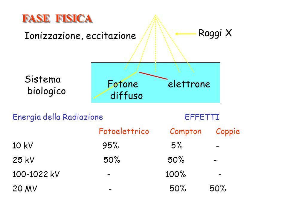 Sistema biologico Raggi X Fotone diffuso elettrone FASE FISICA Energia della Radiazione EFFETTI Fotoelettrico Compton Coppie 10 kV 95% 5% - 25 kV 50%