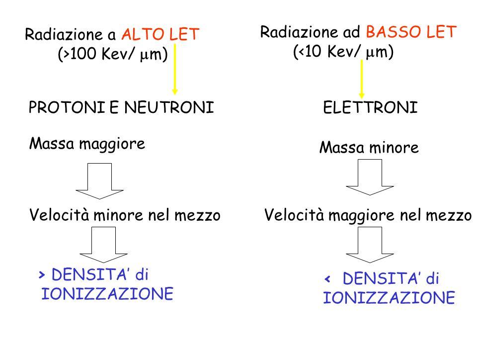 Radiazione a ALTO LET (>100 Kev/ m) Radiazione ad BASSO LET (<10 Kev/ m) PROTONI E NEUTRONIELETTRONI Massa maggiore Massa minore Velocità minore nel m