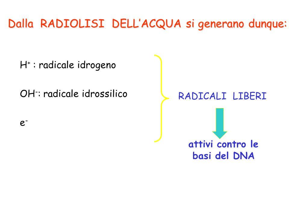 Dalla RADIOLISI DELLACQUA si generano dunque: OH - : radicale idrossilico H + : radicale idrogeno e-e- attivi contro le basi del DNA RADICALI LIBERI