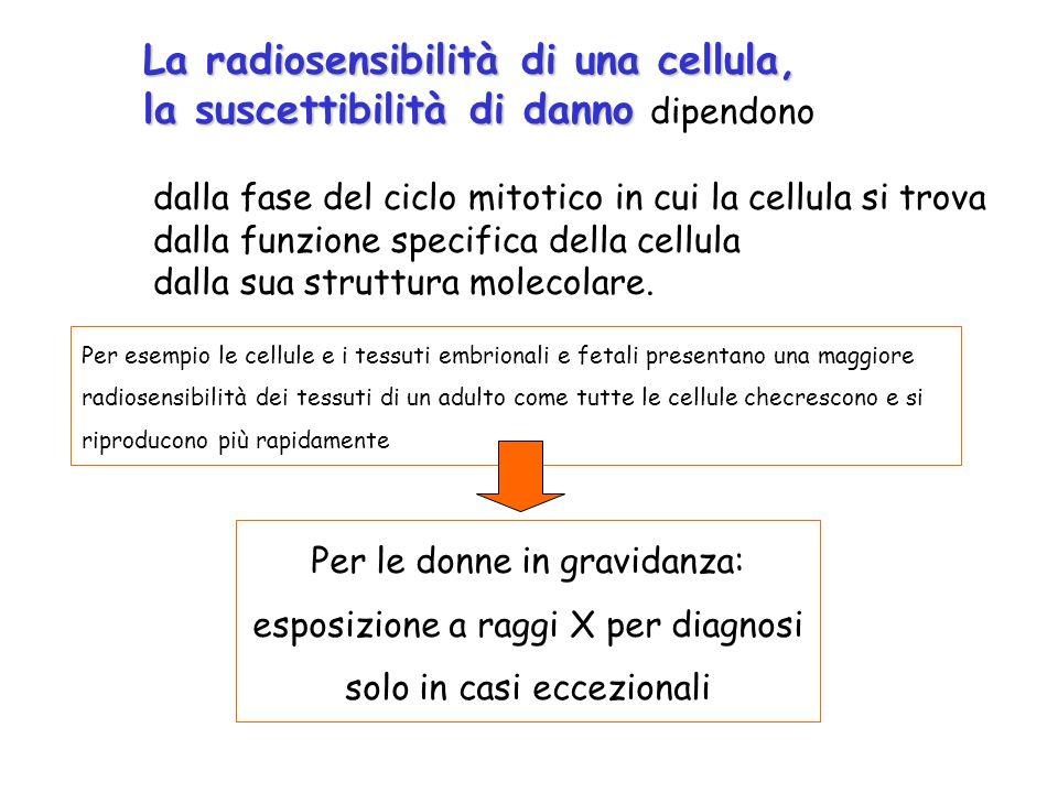 Per esempio le cellule e i tessuti embrionali e fetali presentano una maggiore radiosensibilità dei tessuti di un adulto come tutte le cellule checres