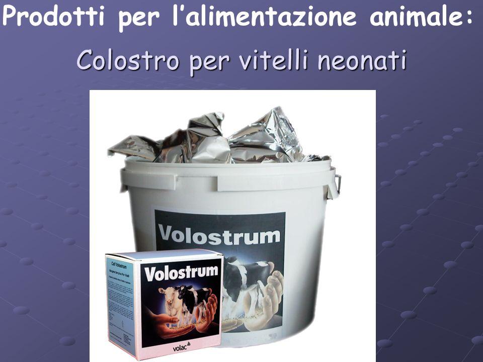 Colostro per vitelli neonati Prodotti per lalimentazione animale: