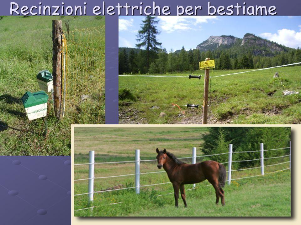 Recinzioni elettriche per bestiame