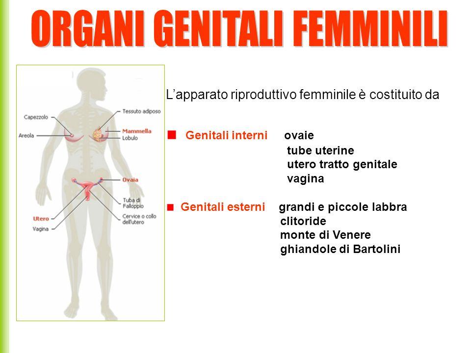 Le funzioni dellapparato genitale femminile produce attraverso un processo di oogenesi i gameti femminile, gli oociti produce gli ormoni sessuali femminili riceve gli spermatozoi per la fecondazione accoglie, nutre e protegge lembrione in via di sviluppo provvede allespulsione del feto
