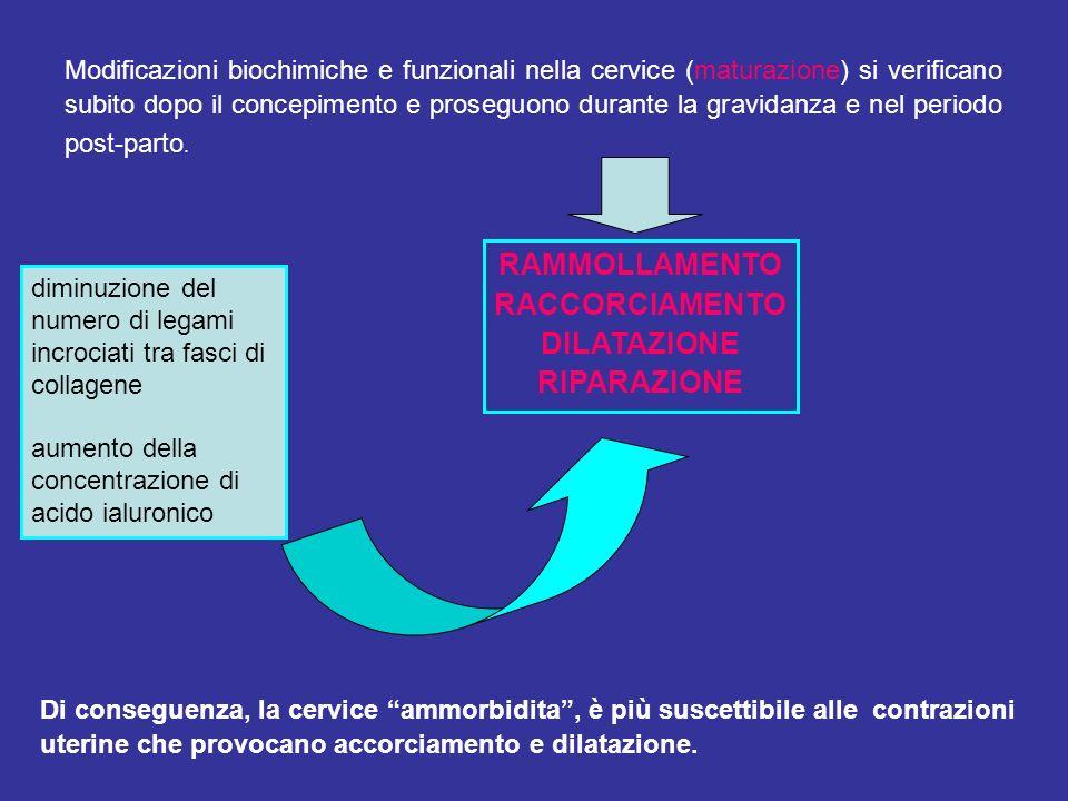 Modificazioni biochimiche e funzionali nella cervice (maturazione) si verificano subito dopo il concepimento e proseguono durante la gravidanza e nel